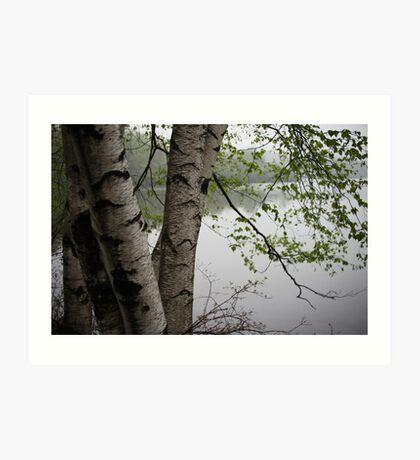 Birch Tree Waterscape 3229  Art Print
