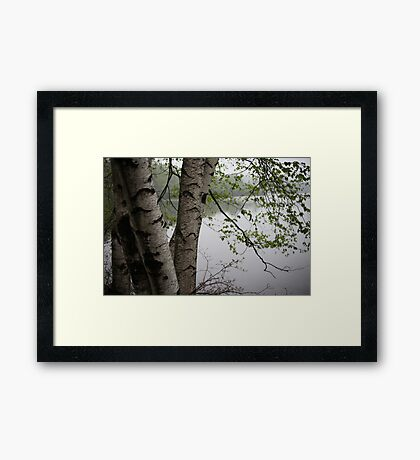 Birch Tree Waterscape 3229  Framed Print