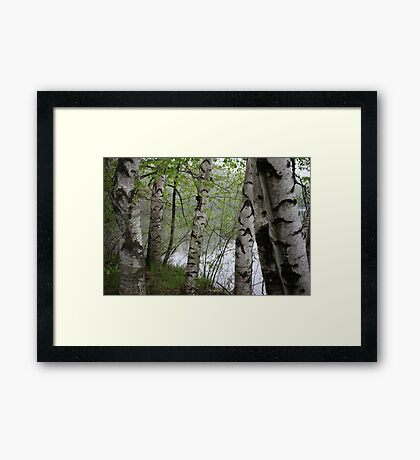 Birch Tree Waterscape 3228 Framed Print