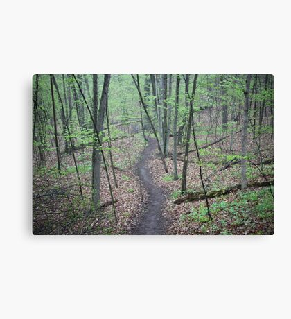 Ravine Trail 3307 Canvas Print