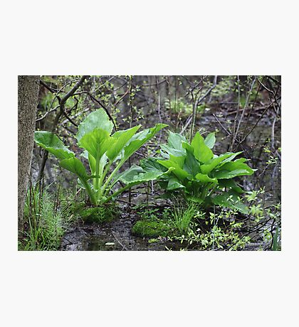Ravine Trail Vegetation 3281 Photographic Print