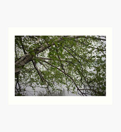 Birch Tree Waterscape 3129 Art Print