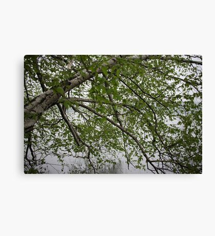 Birch Tree Waterscape 3129 Canvas Print