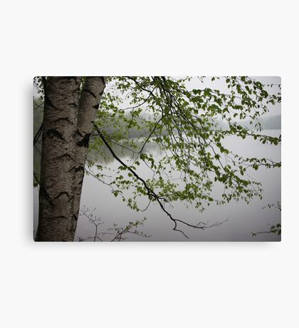 Birch Tree Waterscape 3235 Canvas Print