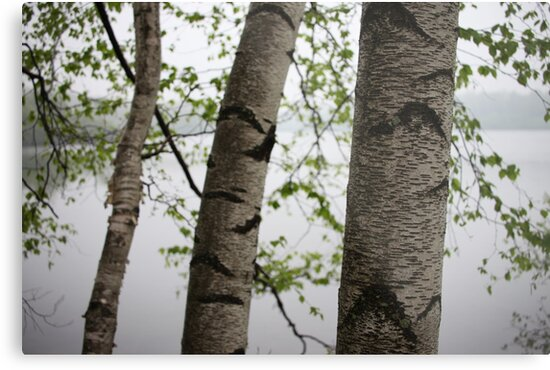 One Two Three Birch Tree 3238 by Thomas Murphy