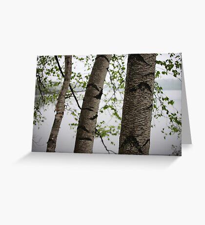 One Two Three Birch Tree 3238 Greeting Card