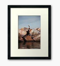 Blue Heron on Red Rock Framed Print