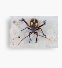 Garden Insect - macro Canvas Print