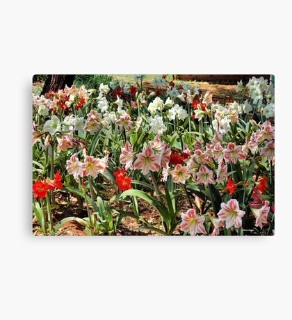IN ABUNDANCE - AMARYLLIS Canvas Print