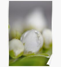 White/green flower, macro shot Poster
