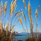 Lake Hawea, New Zealand by Jenny Setchell
