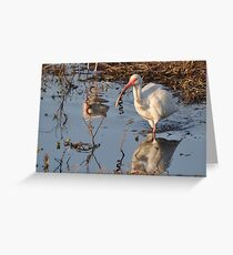 White Ibis eating a young Snake Greeting Card