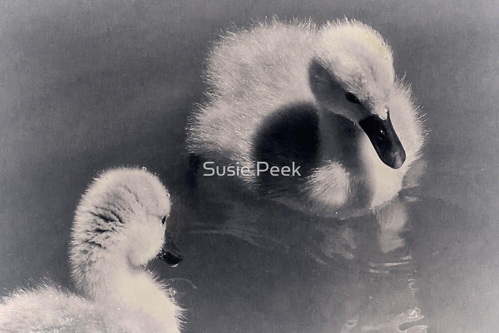 New Beginnings by Susie Peek