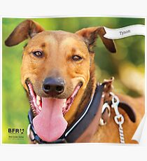 Tyson :: by Wet Nose Fotos Poster