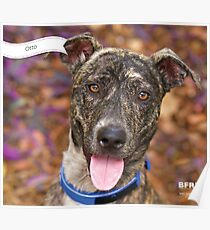 Otto :: by Wet Nose Fotos Poster