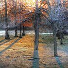 Light Through the Red Oaks by bannercgtl10