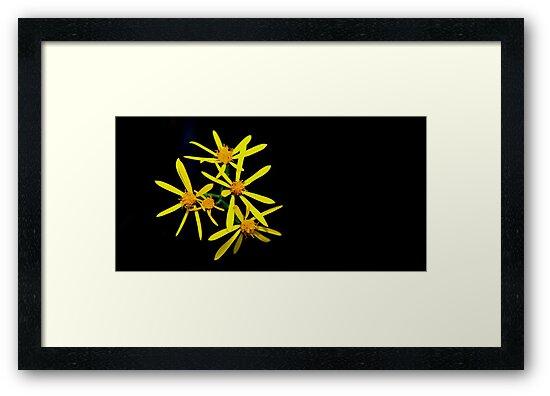 wild flower by fotosky