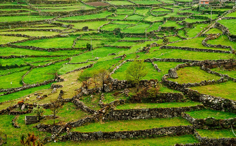 Patchwork fields, Peneda-Geres, Portugal by Andrew Jones