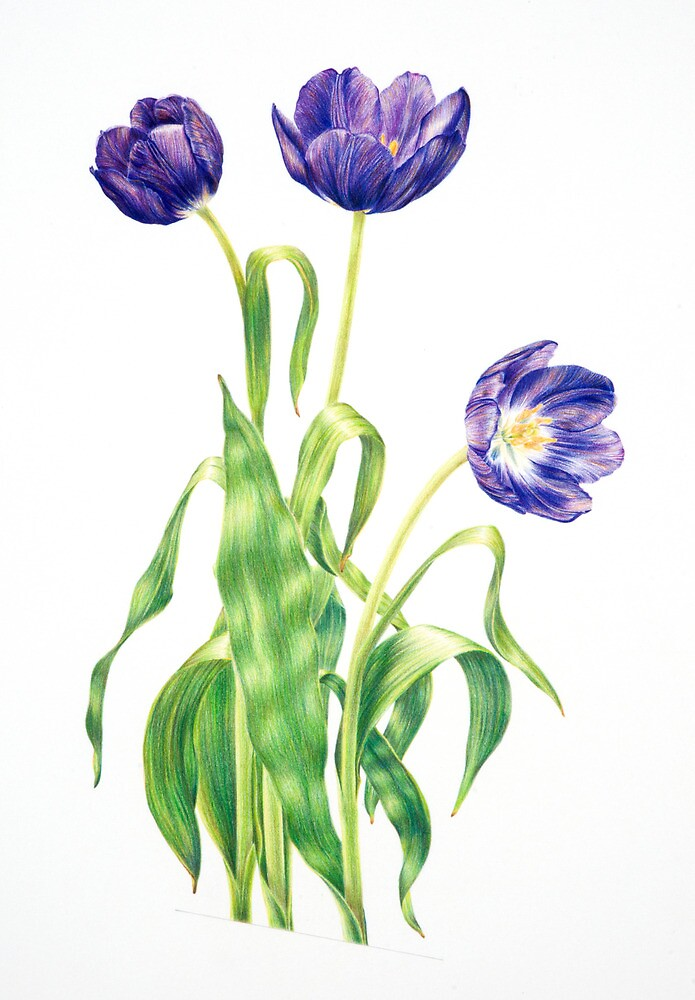 Spring Tulips by PennyArt