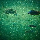 Cichlid Dreams by LauraBroussard