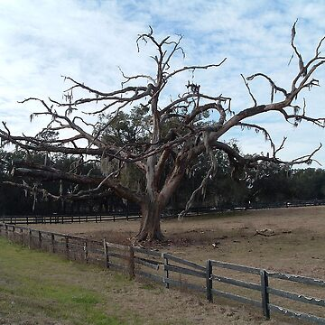 The 475 Tree by candielea07