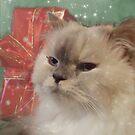 Christmas star by Marie-Eve Boisclair