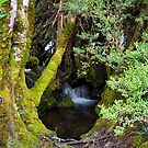 Hartz Mountains Stream #2 by Chris Cobern