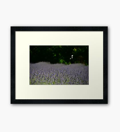 Three fly free Framed Print