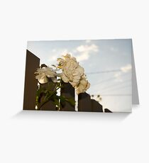 White Roses of Suburbia Greeting Card