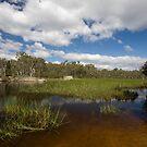 Dunn's Swamp ~ Wollemi National Park I by Lorraine Creagh