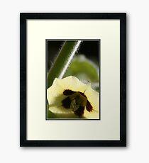Gooseberry blossom - Gauteng Framed Print