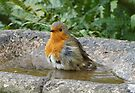 Bathtime and Robin by Barrie Woodward