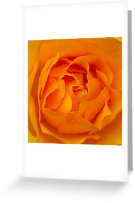 When roses turn orange...  by steppeland