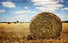 A Roll in the Hay by Lynda Heins