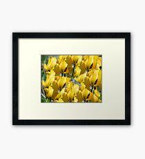 Yellow Burst Framed Print