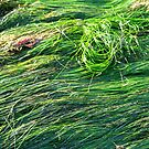Seagrass in the arvo by Trish Peach