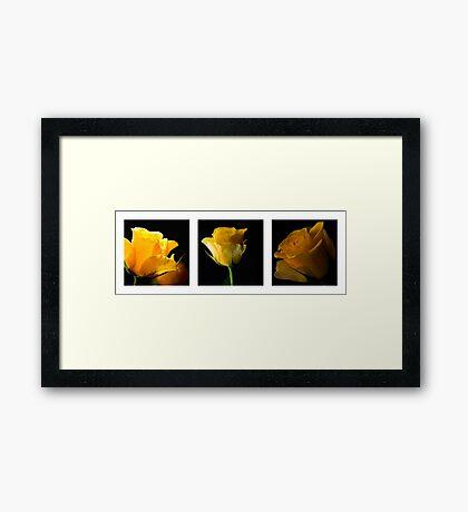 Rose Tryptytch Framed Print