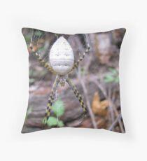 Banded Garden Spider  (Argiope trifasciata) Throw Pillow