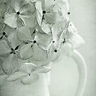 ~ bella fleur pâle ~ by Lorraine Creagh