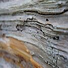 Natural Abstract* by Laurie Perry
