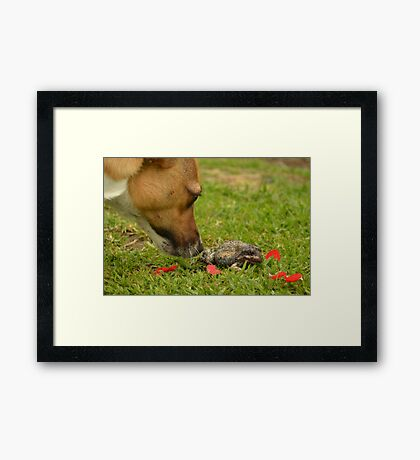 The dog and the.... Framed Print