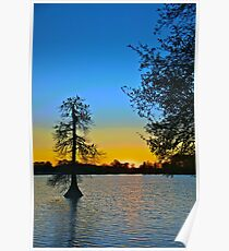 Egrets and Cypress in Silhouette Poster