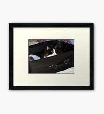If I hide in here, maybe I can sneak on the vacation with you.... Framed Print