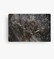 Butterfly Survival Canvas Print