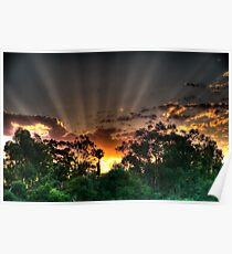 setting suns rays through the trees #2 Poster
