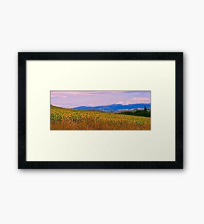 Sunflower Panorama Framed Print