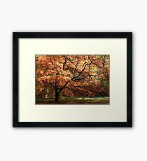Magnificent Autumn Framed Print