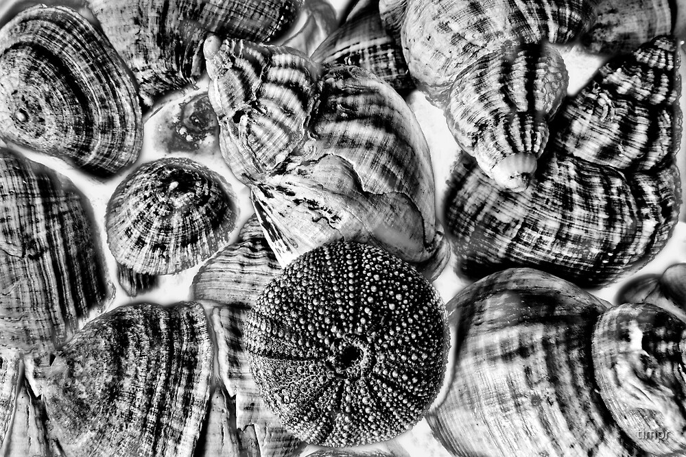 Shell Textures by timpr