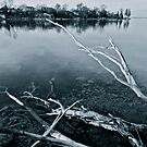 Crystal Waters, Faded Branches by Jessica Bradford