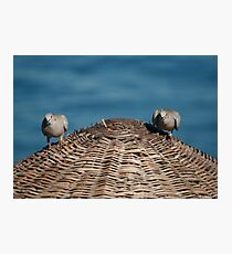 A Pair Of Doves On A Woven Sun Parasol Photographic Print